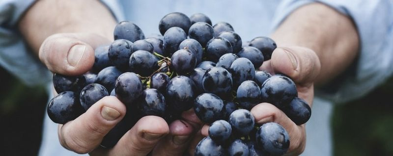 grapes in hands-min