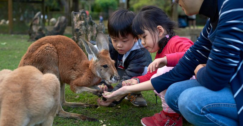 7 Family Holiday Ideas Less Than 7 Hours From Singapore: Perth   SingSaver